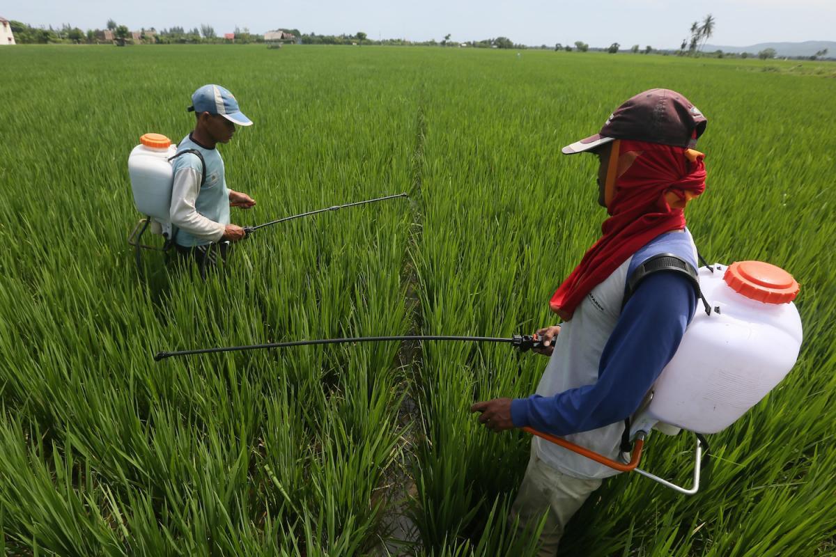 Perlu Data Tunggal untuk Majukan Pertanian